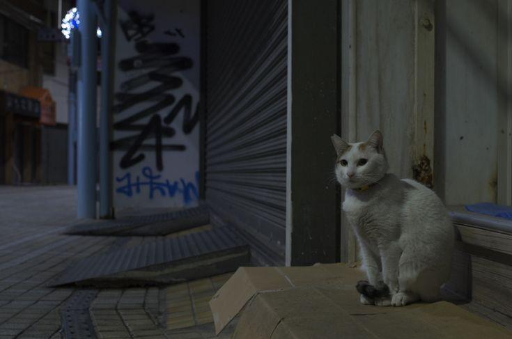 那覇の猫② : CAFE IL MORINO by Tadanobv MORINO