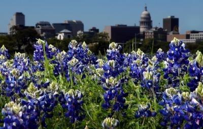 http://www.mamadoesitall.com/2012/04/around-dfw/texas-in-bloom-bluebonnet-season/