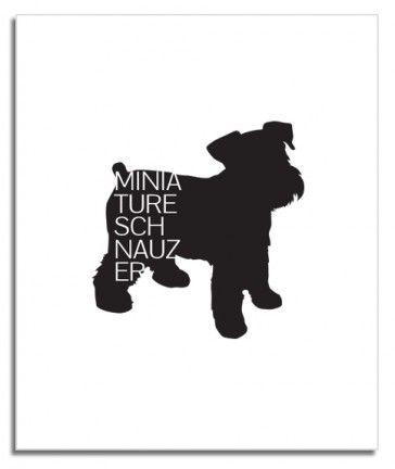 Miniature Schnauzer Breed Love Silkscreen Poster