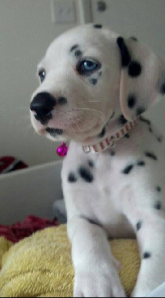 Awww! I want one!!