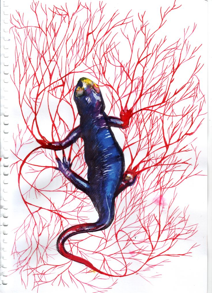 Day 3: The little guy on this one is the world's most poisonous salamander, the California newt, whose skin, blood, and muscles contain tetrodotoxin, a really strong nerve poison, one drop of which can kill a thousand mice! The drawing inksperimented with ballpoint, white gel, and glass dip pens. Ink has a very strong colour payoff and I really liked the effect; it's also translucent, which will be interesting to try in a different area.