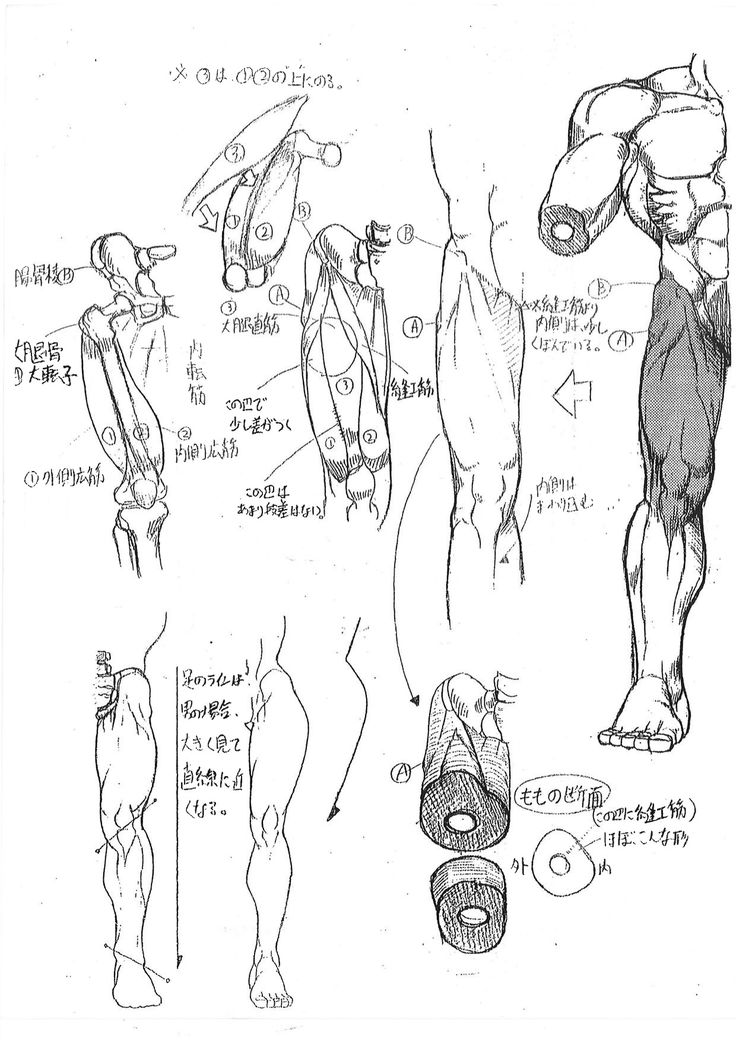 """Internal Capcom anatomy guide for Street Fighter artists - Akira """"Akiman"""" Yasuda (Please check source link for full excerpt!)"""