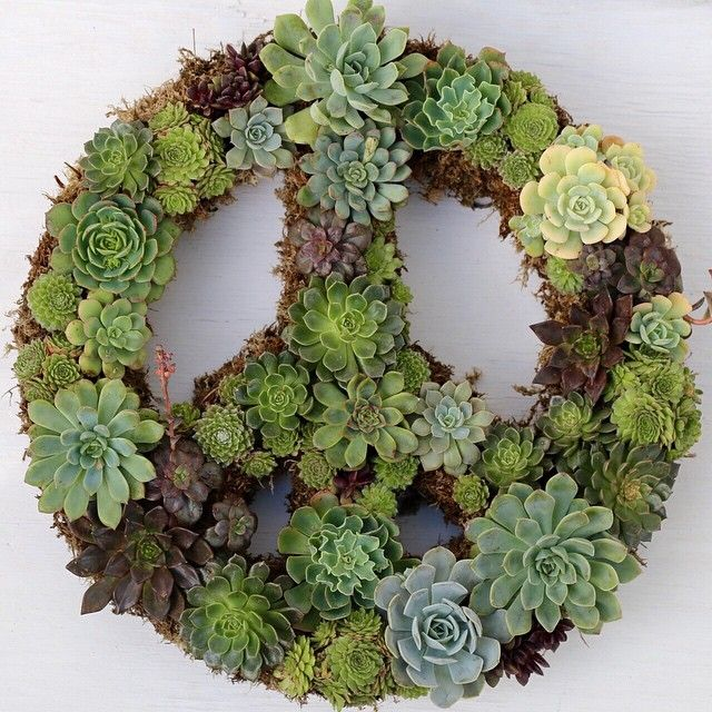 Succulent Peace Sign wreath by Dalla Vita | Landscaping ...