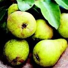 Päronkaka från Hönö - Recept - Tasteline.com