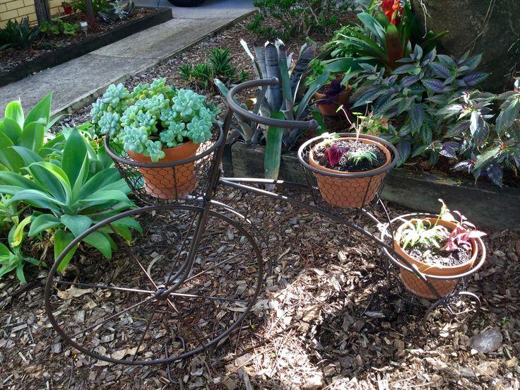 Wait until the plants grow on my bike!