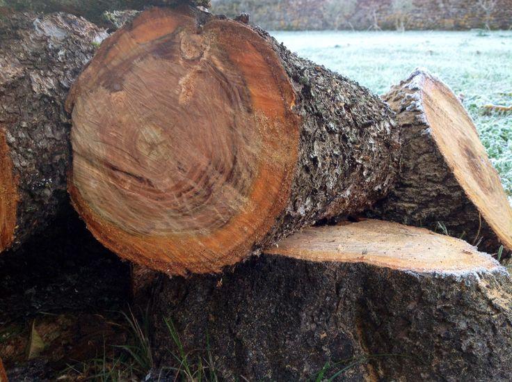 Más troncos
