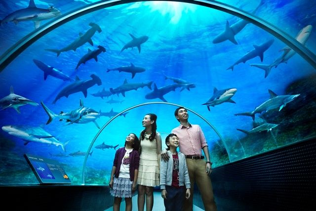 See over thousands of sea animals in S.E.A aquarium Singapore