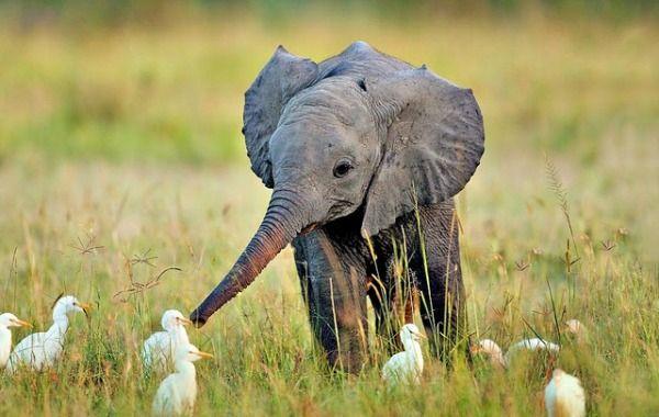 animales bebes