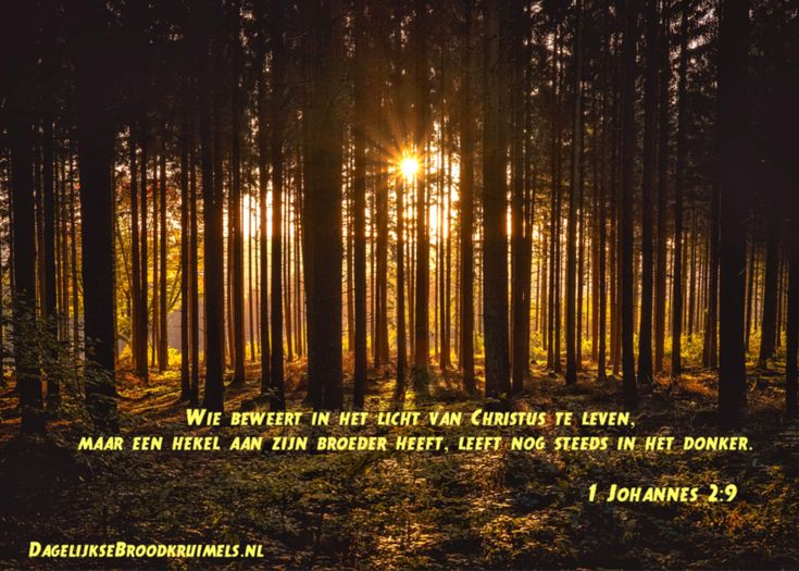 1 Johannes 2:9  Wie beweert in het licht van Christus te leven, maar een hekel aan zijn broeder heeft, leeft nog steeds in het donker. 1 Johannes 2:9