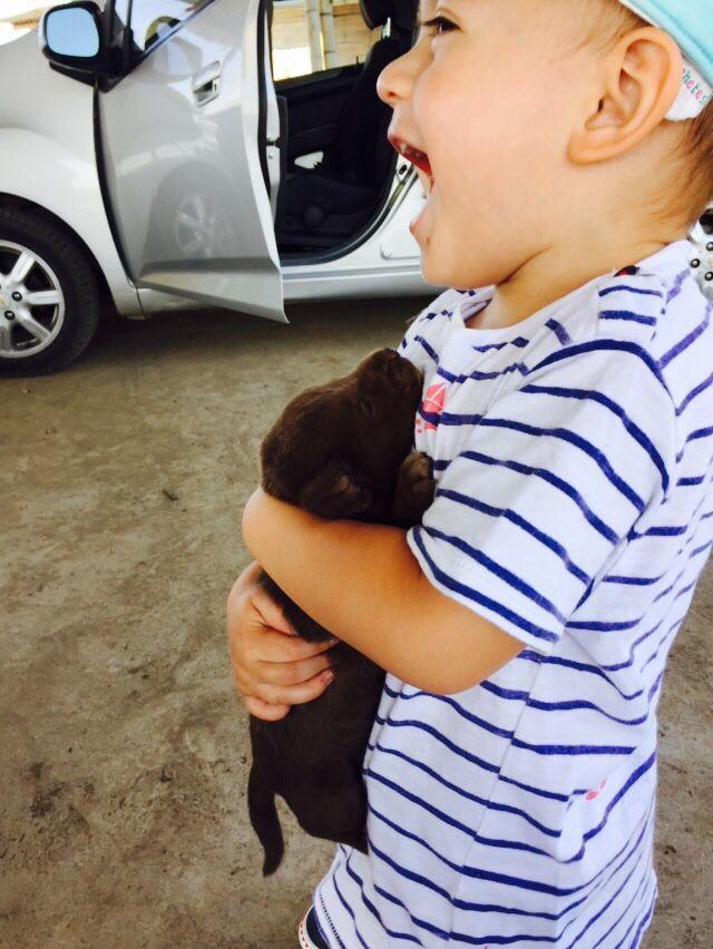 #puppy #love #gorgeous #cute #criollo