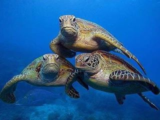 116 Likes, 1 Comments - We Simply Love Turtles ❤❤ (@awesome_insta_turtles) on Instagram