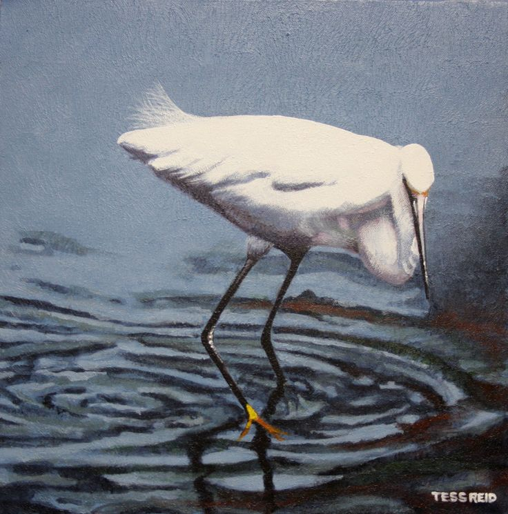 Acrylic Painting of an Egret in water by Tess Reid's Fine Art