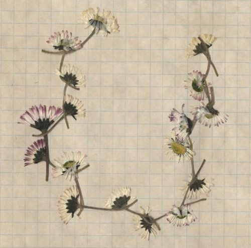pressed daisy chain//LYNNETTE MILLER Idea for a wrist tattoo