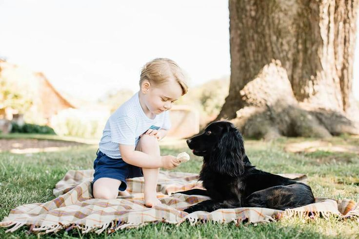 Prince George sharing his ice cream with his dog, July 2016