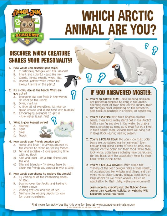 Which Arctic Animal Are You? Take this fun quiz from Animal Jam Academy and find out which animal fits your personality, and learn a little something new, too! Keep exploring and PLAY WILD!