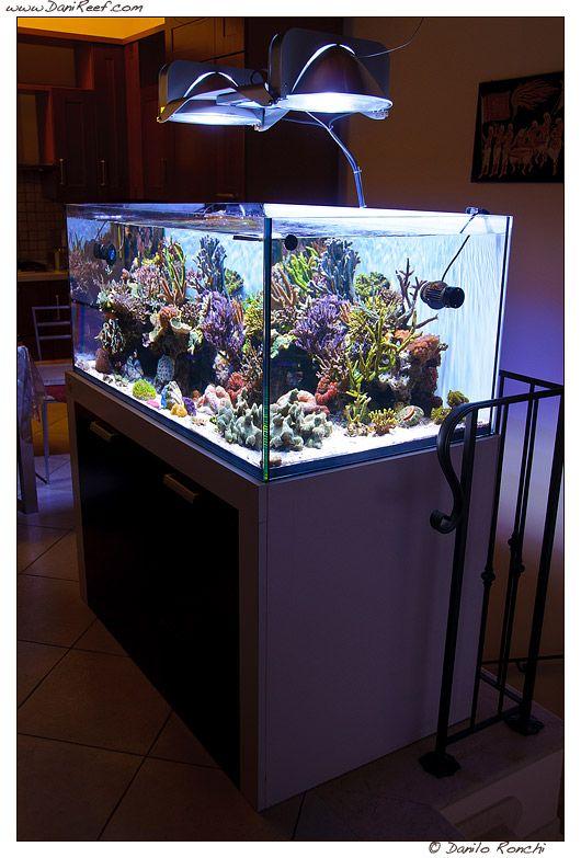 Andrea's Negusanti Marine Aquarium, tank of the month - Danireef - il sito  dell'