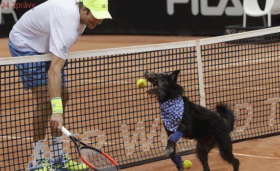 VIDEO: Chcete mě? Aport! Jak psi z útulku sbírali v Brazílii míčky