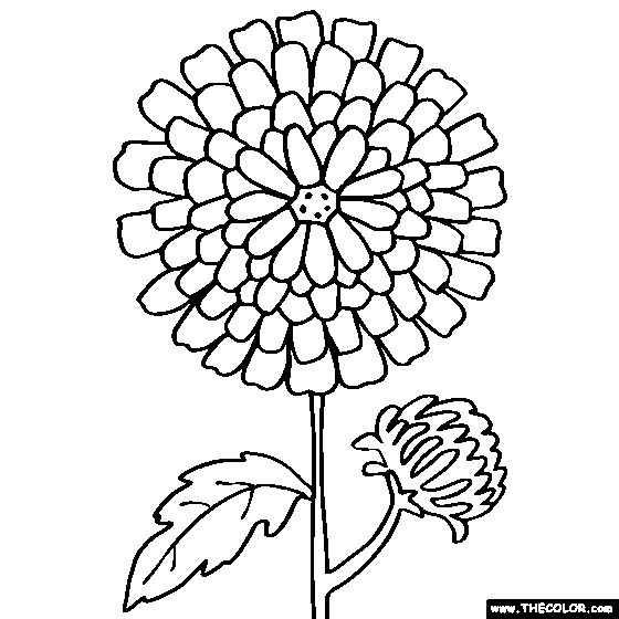 chrysanthemum flower online coloring page goes along with the book chrysanthemum as a