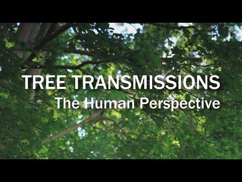 Brad Johnson Tree Transmissions