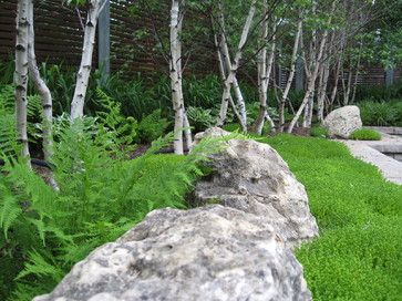 asian landscape by genus loci ecological landscapes inc.Build a border with trees. When designing with white, remember that trees provide big impact, as shown in this Toronto garden, which has a line of white birch set against a building as a naturalistic screen with harmonious repetition.