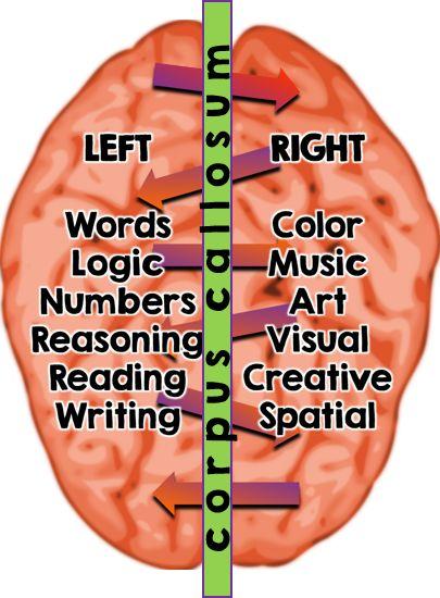 General Brain Breakdown