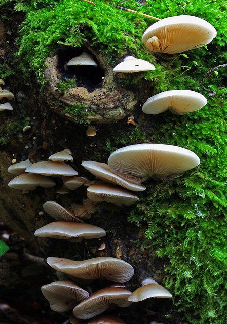 Cogumelos formando mais uma maravilhosa escada de duendes