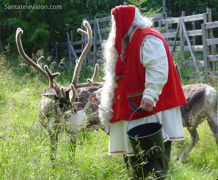 Santa Claus feeding his reindeer in Lapland