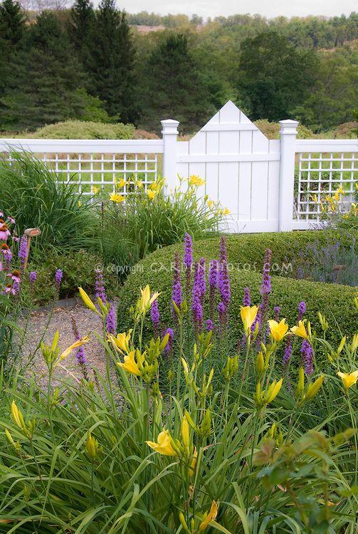 Hemerocallis daylily garden in summer near house with fence, Liatris, yellow daylilies