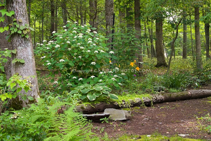 85 best images about Dry Shade Garden on Pinterest