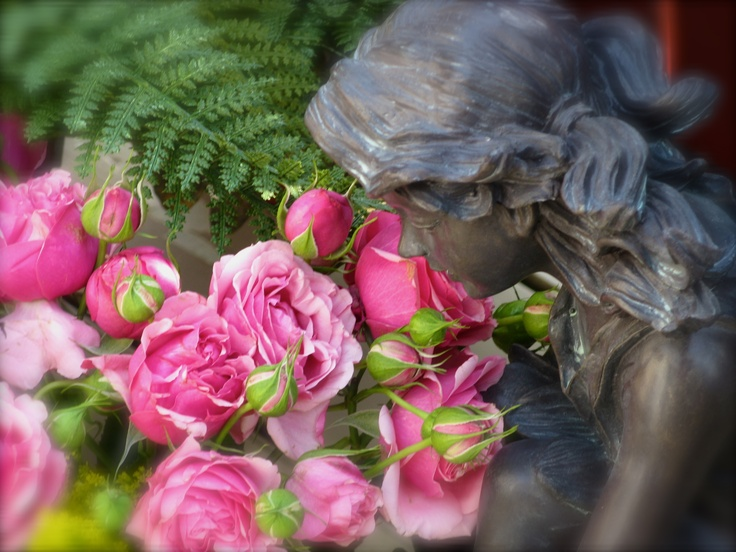 Each fairy breath of summer, as it blows with loveliness, inspires the blushing rose.  ~Author Unknown