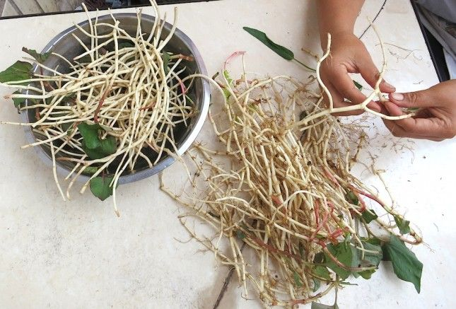 Prepping fish mint root | Cooking South of the Clouds | Pinterest