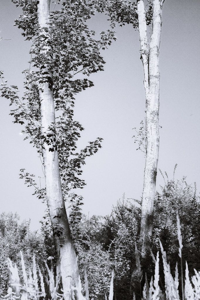 bwstock.photography  //  #two #trees
