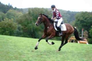 Das Pferd Tsar xx:  Englisches Vollblut, Hengst, ...