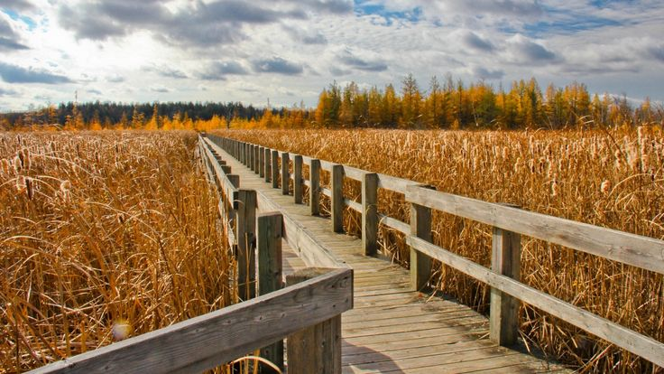 Don't drain the swamp! Why wetlands are so important