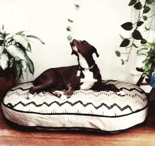 """See Scout Sleep"" Really cute collars, leashes and beds. Made from all sustainable and organic materials in New Orleans"