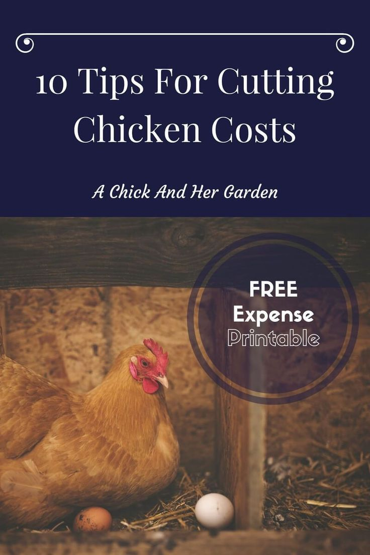 1418 best chicken houses and info images on pinterest backyard