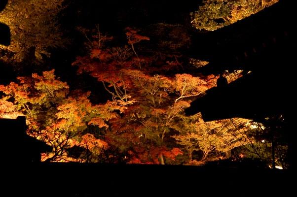 紅葉 長谷寺 Hasedera in autumn - Kamakura - Japan