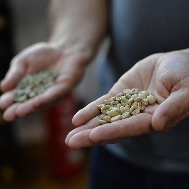 Grüne Kaffeebohnen #greencoffeebean #kaffeebohnen #kaffeeliebhaber #beckingkaffee #hamburg #coffeelovers #hands