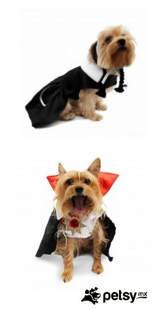 17 Mejores Ideas Sobre Halloween Para Perros En Pinterest
