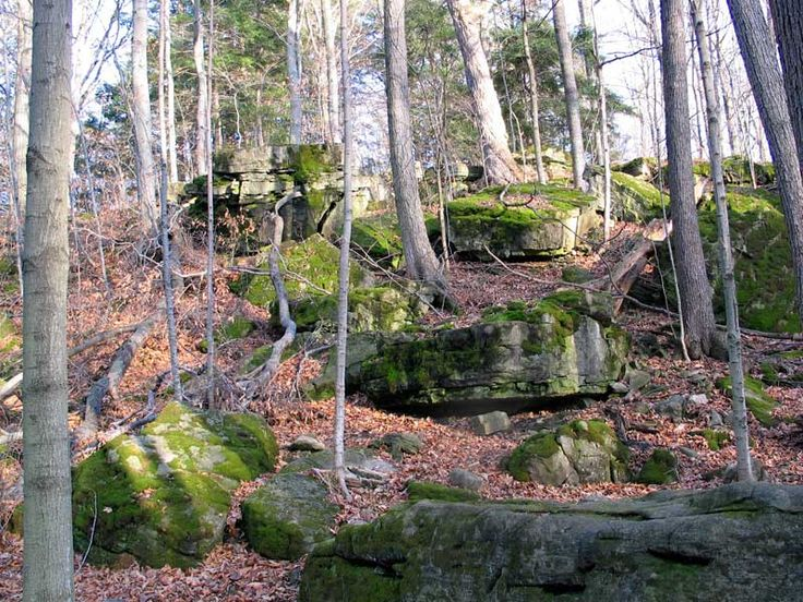 """Dundas Valley Headwaters Trail (Hamilton), appx 1 to 1.5 hr away from High Park  Hike Length: 18.2 km/Time: about 5 hr  Conservation Halton declares the CA, """"a favorite destination of any outdoor enthusiast"""" & I'd have to agree w/ that. Add to that the valley's 1,200 hectares of Carolinian forests, fields, cold-water streams & stunning geological formations that are home to an array of rare plants, birds and wildlife & you have 1 great destination."""