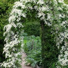 Clematis for every month of the year | Sarah Raven