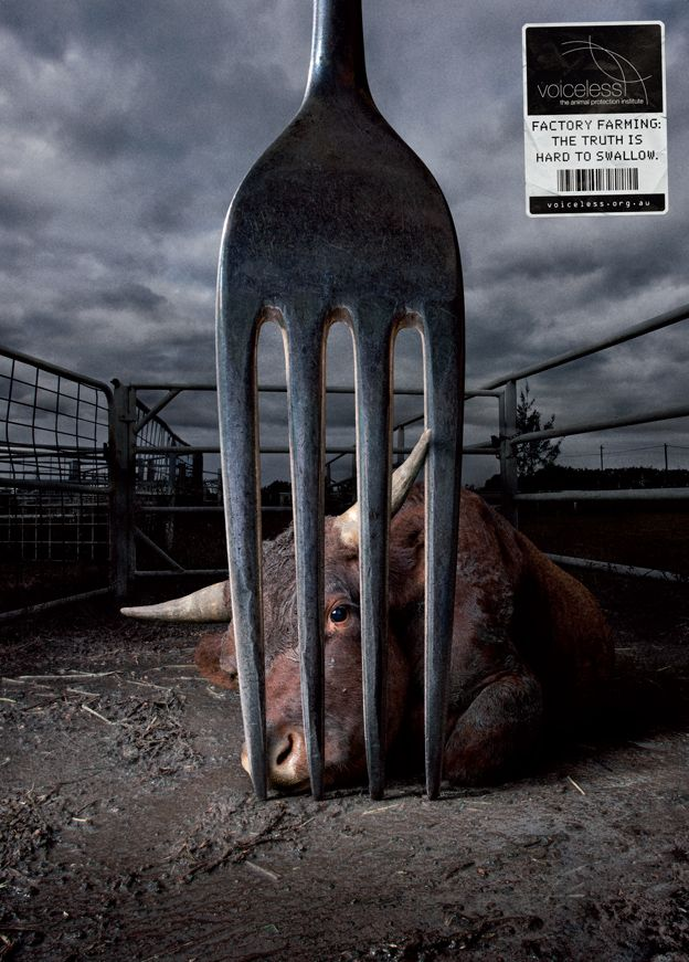 this ad explain to us compassion shock advertisement, this cow is showing sadness to it being ready to be killed, shows us the animal that we are killing for the meat that we eat.