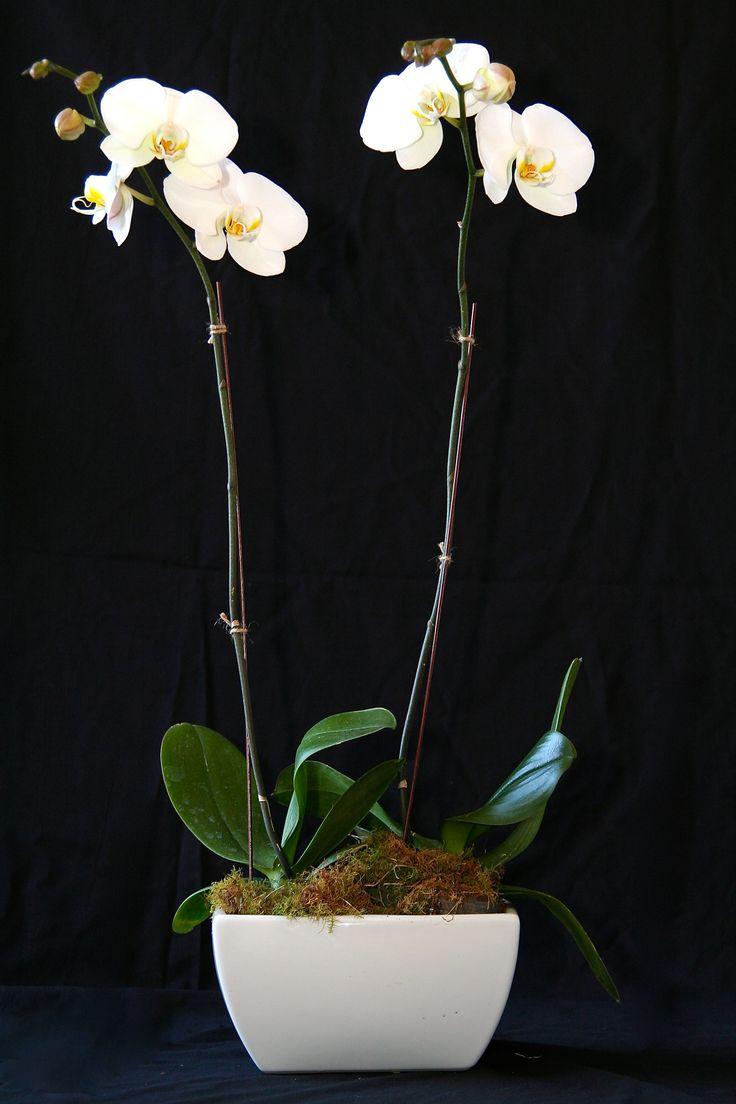 Orchids in ceramic