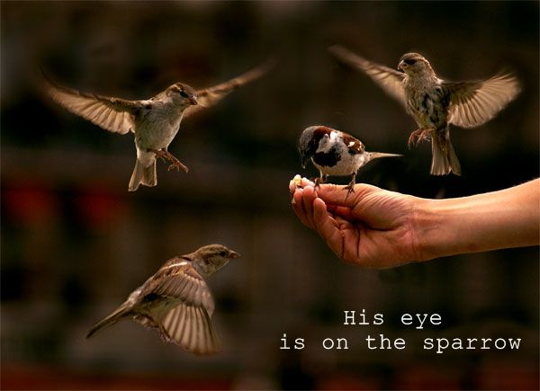 23 Best Images About His Eye Is On The Sparrow On