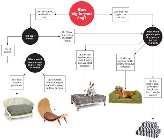 A Flowchart Guide to Choosing a Dog Bed - WSJ
