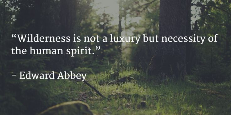 """""""Wilderness is not a luxury but necessity of the human spirit.""""   - Edward Abbey"""