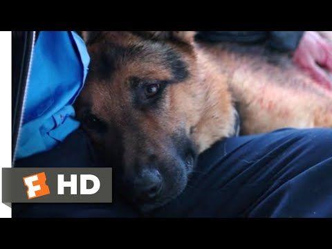 A Dog S Purpose Full Movie Free Youtube