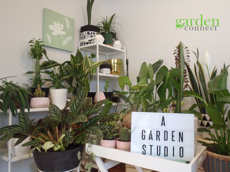 Indoor plants & waterwise plants for perth