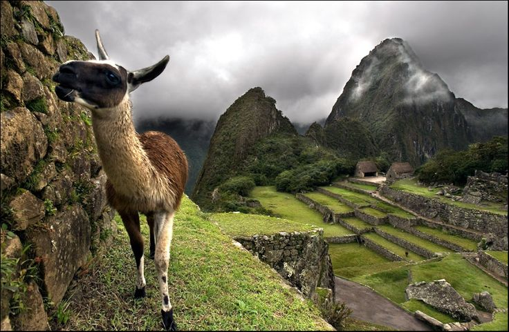 The Andes Mountains and a cute alpaca.