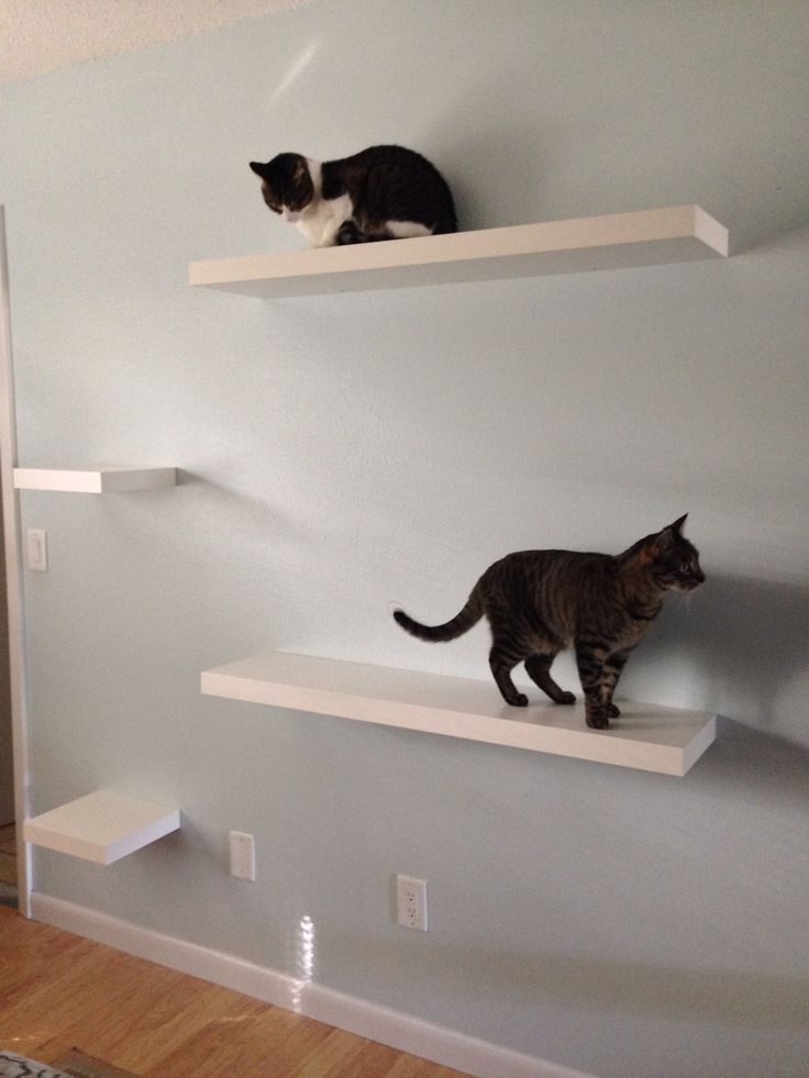 Thanks Ikea for the idea for cat shelves! Staggered Ikea LACK white shelves in…